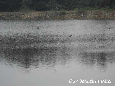 Thriving man-made lake on our site.