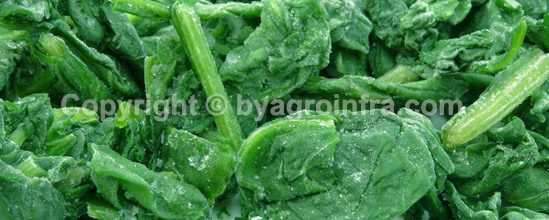 IQF Frozen Spinach Leaves Whole